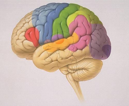 Postižení mozku není náhoda