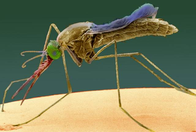 Zvrat v boji s malárií