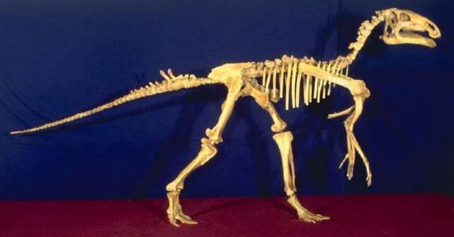 Proháněli se na Kutnohorsku dinosauři?