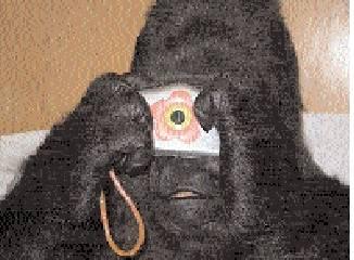 Gorila si umí říct o zubaře