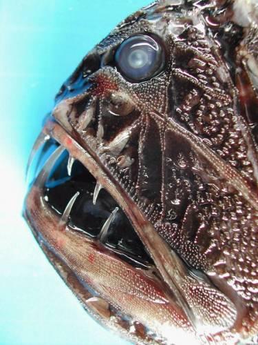 Expedice MAR – ECO objevila neznámé živočichy