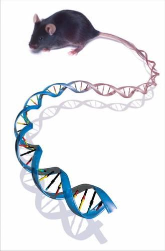 Deset největších objevů genetiky