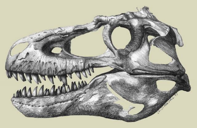Radiokarbonové datování dinosaurů