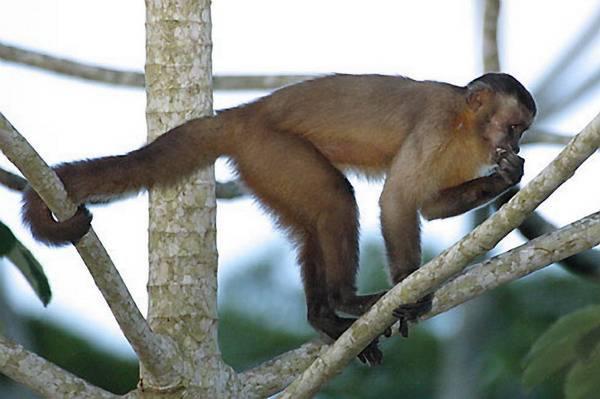 Berou opice úplatky?