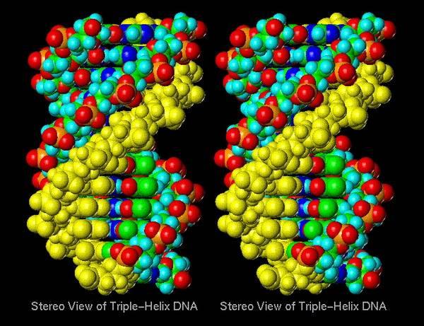 Zdá se to být příliš fantastické na to, aby to byla pravda, ale vzrůstající počet výzkumů potvrzuje názor, že DNA, základní stavební kámen života, by mohla být také východiskem pro překvapivě silnou novou generaci počítačů.