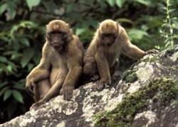 Nová opice, která žije v hlubokém lese