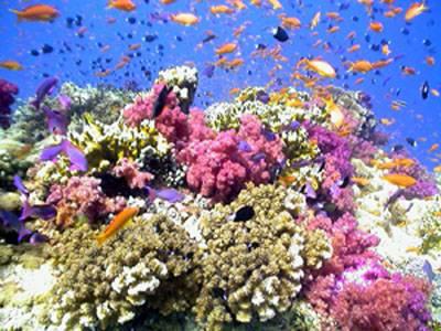 Nejhlubší americký korálový útes