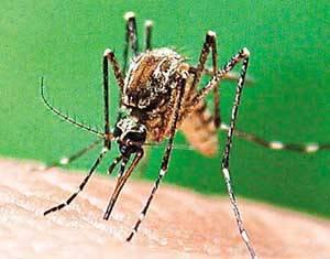 Britští vědci vyzráli na komáry