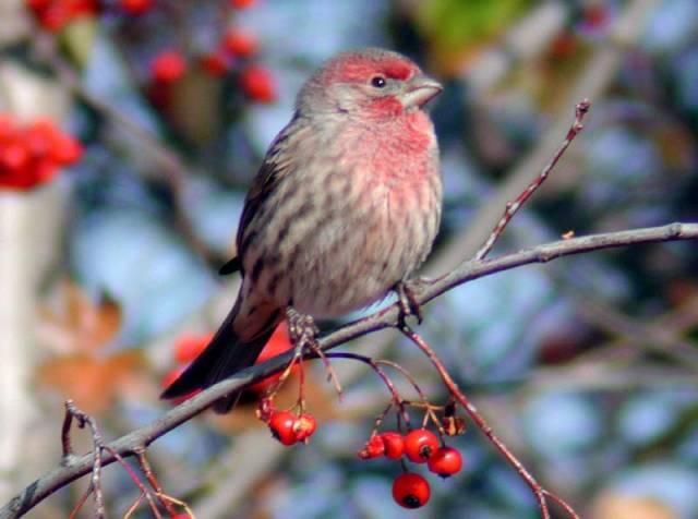 Kdy se ptáci učí zpívat?