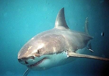 Past na žraloky