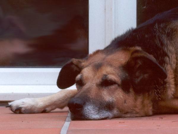 Test psí osobnosti