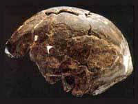 Nejstarší lebky z Etiopie