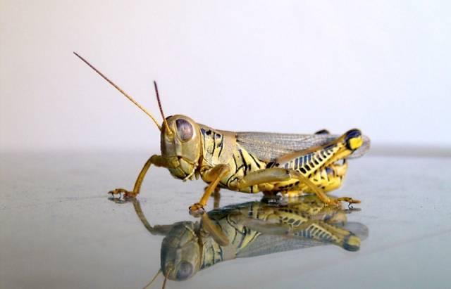 """Proč dělá hmyz """"dýchací přestávky""""?"""