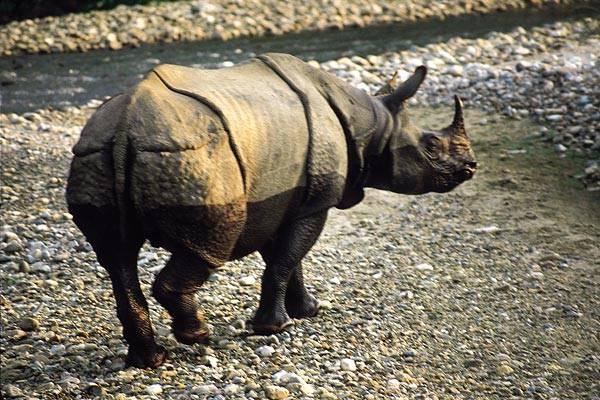 Jak se počítají nosorožci?