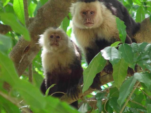 Opice překvapily užíváním nástrojů