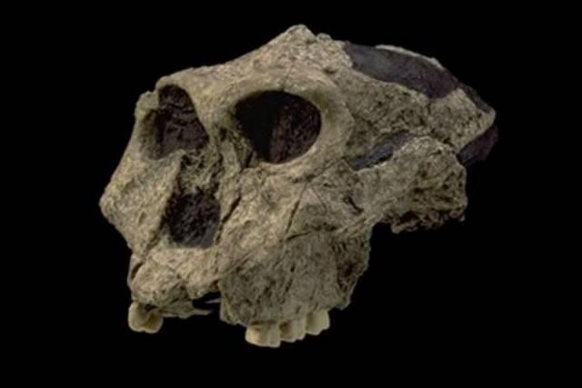 Američtí antropologové nyní na základě analýzy mikroskopických stop na zkamenělých zubech složili jídelníček dvou předchůdců dnešního člověka.