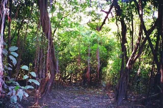 Amazonské lesy mizí výrazně rychleji než bylo známo