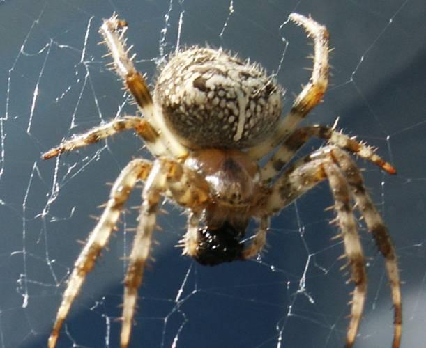 Bojíte se pavouků? Píchněte si stresový hormon kortisol.