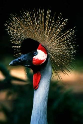 Jeřábi patří mezi nejkrásnější velké ptáky světa. I přes jejich trvající ohrožení jejich počty v posledních letech stále rostou. Nyní se již usídlili dokonce i na našem území!
