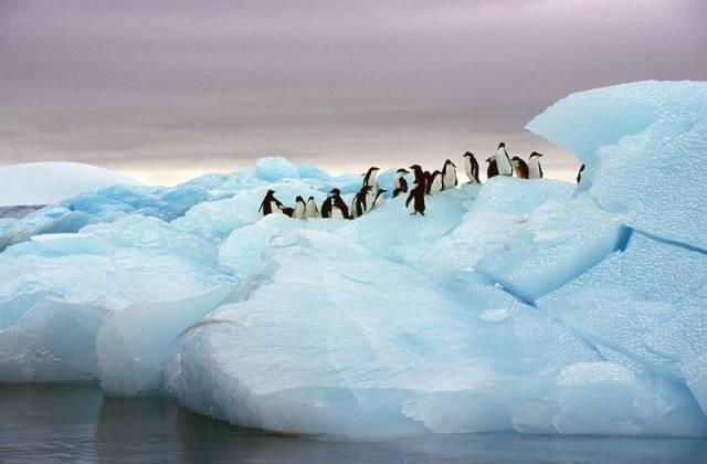 Antarktidě hrozí invaze!