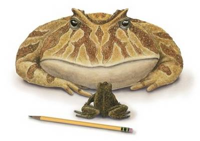 Britští paleontologové objevili pozůstatky žáby, která vážila kolem 4,5 kg.