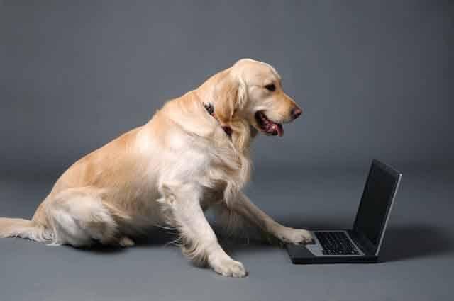 Dorozumění lidí se zvířaty zatím bylo možné snad jen v pohádkách. Maďarští vědci však v současnosti vyvíjejí počítačový program, který by měl umožnit porozumění psí řeči.