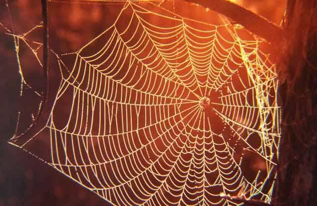 Ač se mnoho lidí pavouků štítí, i tento osminohý hmyz může být v mnoha oblastech užitečný. Například pavoučí vlákno je pevnější nejen než ocel, ba dokonce i než kevlar, což je materiál, ze kterého se vyrábějí neprůstřelné vesty. Jenže, přimět pavouky, aby svůj poklad dobrovolně odevzdávali, je docela složité. 21. STOLETÍ vím prozradí, jak se s tím nyní vědci vypořádali.