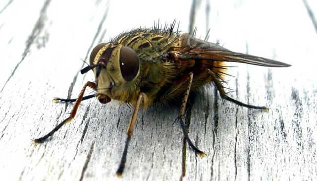 Tušíte, že kdyby jádra atomu byla veliká jako tenisák, elektrony by měly velikost zrnek písku a bílou mičudu by obíhaly asi ve vzdálenosti 150 metrů? Pokud by byl člověk ve vztahu ke své váze silný jako mravenec, unesl by na zádech plně naloženou menší škodovku.