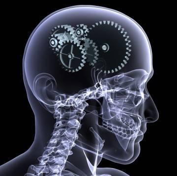 """Učili jste se včera večer do noci a dnes si nic nepamatujete? Máte potíže soustředit se po ránu na nové informace? Výzkumy amerických vědců prováděné na laboratorních hlodavcích mají možná vysvětlení. Za schopností zapamatovat si informace stojí vnitřní """"hodinky"""", hormonálně řízené cykly cirkadiálních rytmů."""