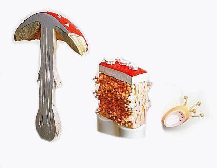 Hub (Fungi, Mycetes) vědci dosud popsali přes 100 tisíc druhů. Z toho dvě třetiny tvoří nižší či malé houby – mikromycety (plísně, kvasinky apod.). Vyšší (velké) houby mají souhrnné označení makromycety. Zatím jich známe cca 15 000 druhů. Většina makromycetů(?) má tyto shodné znaky: