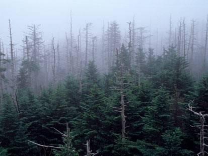 """Kyselé deště jsou považovány za jednoho z nejhorších """"zlých duchů"""", které vypustil člověk do planetárního klimatu.  Nová studie amerických vědců ukazuje, že změny podnebí nemusí přírodu vždy jen ničit."""