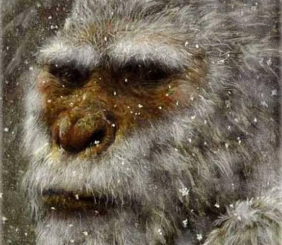 """Laickou i odbornou veřejnost v nedávné době pořádně překvapila zpráva, která by mohla znamenat obrat v bádání po jednom z nejslavnějších bájných tvorů naší planety, himálajském """"sněžném muži"""" yettim, známým také pod tibetskými výrazy Mi-teh (""""medvědí muž"""") či Mi-Go (""""divoký člověk""""). Do rukou britských vědců se totiž v létě letošního roku dostaly zvláštní chlupy, které by mohly do celé záležitosti vnést více světla."""