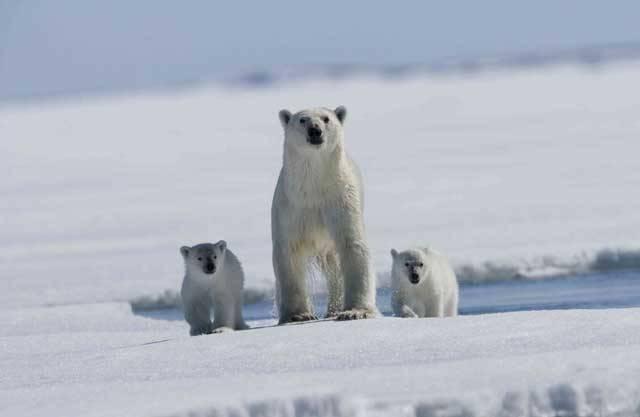 Na první pohled by se mohlo zdát, že ten kus ledu kolem severního pólu nemůže nikoho zajímat. Snad jen až na pár ledních medvědů, polárních lišek či lachtanů. Jenže v poslední době se situace významně obrací. Slovo Arktida se stále častěji vyslovuje i v Bílém domě nebo v Kremlu. Důvod je jasný – tato nehostinná pustina skrývá nesmírné surovinové bohatství.