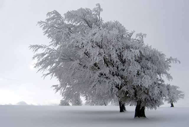 Příroda umí vytvořit neskutečné zázraky. Stačí jen připomenout, co dokáže obyčejná zmrzlá voda. Sníh, ledové krystaly, kroupy, jinovatka, námraza, kra, rampouch, všechny tyto podoby na sebe dokáže vzít voda právě ve zmrzlém stavu.