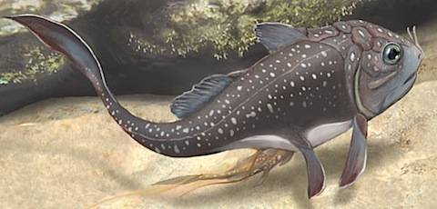 """Obratlovci ze třídy pancířnatců (Placodermi) z příbuzenstva ryb jsou dnes již kompletně vymřelou skupinou, kterou známe pouze z devonských a karbonských fosílií. Nález, který nedávno detailně prozkoumali a popsali odborníci z Přírodovědeckého muzea v Londýně ukazuje, že už i tito dávní obratlovci mohli být """"těhotní""""."""