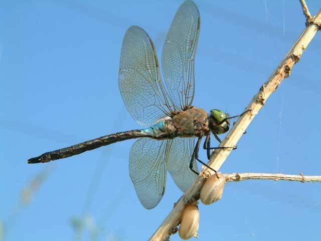 Z naší lidské perspektivy je hmyz buď nepříjemnou havětí, škůdcem či spojencem proti nim. Představte si ale, že měříte jen několik milimetrů, a rázem se z pěkných lesklých brouků či vážek stanou neuvěřitelné hladové příšery, před nimiž je třeba se co nejrychleji ukrýt. 21. STOLETÍ vás dnes provede světem těch nejnebezpečnějších hmyzích predátorů.