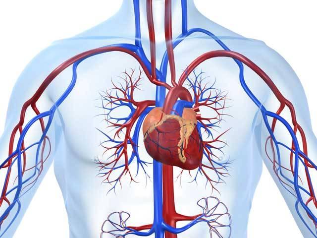 Onemocnění srdce a cév je nejčastější příčinou úmrtí – a ČR patří na přední místo světové černé statistiky. Naše srdíčko je jako motor, pohánějící autíčko – tělo. Jenže i nejlepší motor občas selže. Místo automechaniků nastupují kardiologové. Pro postižené teď mají novou naději!