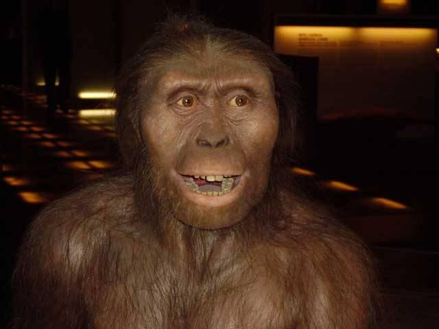 """Hromadná vymírání organismů bychom mohli přirovnat k příslovečnému hrdlu lahve. Většinu bujícího života před katastrofou pohřbí zapomnění a """"vítězi"""" se často stávají dřívější outsideři. O tom, kdo projde úzkým hrdlem a stane se tak Adamem a Evou příštích generací organismů, prostě rozhoduje náhoda. Řada současných vědců mluví o tom, že stojíme na prahu šestého největšího vymírání v dějinách života na Zemi."""