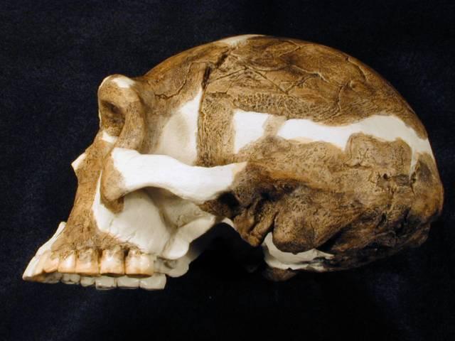 Užití nových metod dokáže někdy slušně zamíchat sumou starých poznatků. Nové datování fosilních pozůstatků pekingského člověka ukazuje, že tito dávní příslušníci druhu Homo erectus byli nejspíše prvními lidmi, kteří dokázali přežít v chladném podnebí.