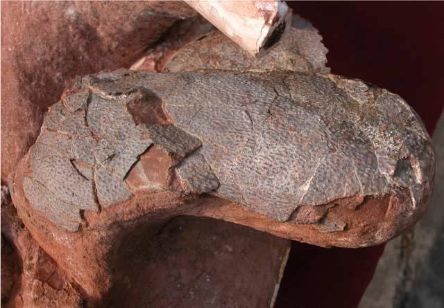 Paleontologové z celého světa jsou zděšeni. Ve sbírkách předních muzeí, univerzit a výzkumných pracovišť byly v poslední době nalezeny desítky fosilií dinosaurů sporného původu.