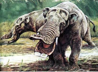 Vědci mají většinou za to, že za vyhynutím organismů stojí změny podnebí, které je přinutily přejít na nevyhovující typ potravy. Podle nedávné studie amerických paleontologů to však vypadá, že zvířata jsou mnohem přizpůsobivější, než předpokládá většina současných modelů.
