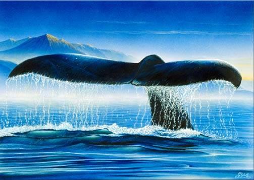 """Velryby, které jsou roztroušeny po obrovitých oceánských dálavách, se dokáží na velké vzdálenosti dorozumívat prostřednictvím zvuků. Američtí biologové nedávno zjistili, že v poslední době začaly """"zpívat"""" hlubším hlasem. Důvodem může být zvyšování jejich počtu."""