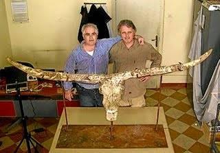 """Španělským archeologům se nedávno ve výchoafrickém státě Eritrea podařilo objevit lebku dříve neznámého  tura, starou 2,5 miliónů let. Její poloha nedaleko lidských ostatků napovídá, že tato mohutná zvířata sloužila dávným pralidem jako potrava. Nově objevená lebka podle nich také patřila """"přechodnému článku"""" mezi africkými a asijskými tury."""