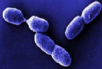 Výzkum nejrůznějších mikroorganismů může někdy přinést výsledky, které vědci původně vůbec neočekávali. Na kalifornské univerzitě v Irvine zkoumali mikrobiologové schopnosti jedné z bakterií fixovat vzdušný dusík a zjistili, že se také výborně hodí k výrobě plynu, který lze užívat jako palivo - propanu.