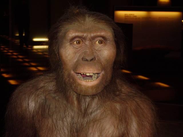 """Kdy přestali být dávní hominidé """"bezmocnými"""" sběrači ořechů a kořínků a přešli k systematickému lovení zvěře? Nedávné nálezy z Etiopie přinutily vědce posunout tuto hranici o celý milión let! Kamenné nástroje k lovu užívali již příslušníci druhu Australopithecus afarensis, tedy i slavná Lucy."""