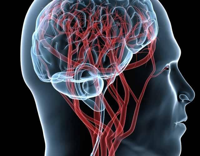 Když chtějí vědci charakterizovat lidský mozek, nejnověji užívají přirovnání o propojení mikrokosmu s makrokosmem. Vždyť náš mozek obsahuje asi miliard tisíc (tisíc miliard??) nervových buněk – jako hvězd v nekonečném vesmíru. Nejnověji odborníci opět dokázali, že lidé kapacitu mozku dokážou v běžné praxi zatím využívat na pouhých 10 procent!