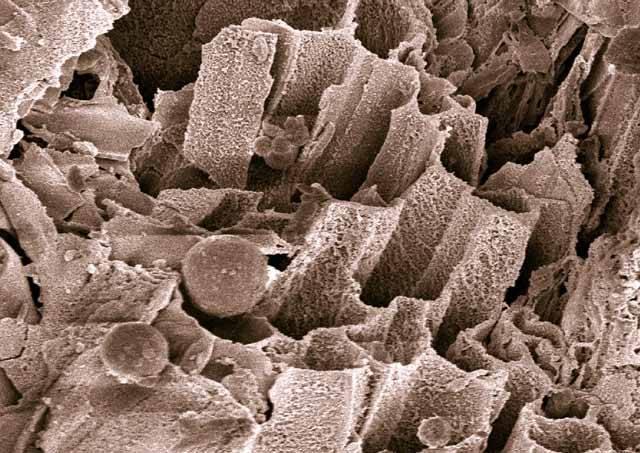 Nová technologie, která je známá pod komplikovaným názvem hydrotermální karbonizace, by mohla v budoucnu po čertech zamíchat vývojem hospodářství. Umožňuje totiž velmi efektivně využít biologický odpad z rostlin a přeměnit jej na humus, zemní oleje či dokonce hnědé uhlí. Záleží jen na tom, jak dlouho bude reakce probíhat. Nevěříte?