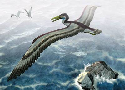 V nedávné době byl díky spolupráci německých a chilských paleontologů pokořen další rekord živočišné říše. V Chile byly nalezeny zbytky pozdně třetihorního mořského ptáka, jehož rozpětí křídel překonalo všechny doposud potvrzené rekordy - od konce jednoho křídla na druhý měřil tento gigant celých 5,2 metru.
