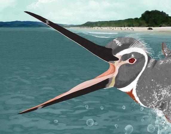 """Při vyslovení slova tučňák každému okamžitě naskočí pták """"oblečený"""" v černobílém fráčku. V Peru však byly nedávno objeveny ostatky obrovského třetihorního tučňáka, jehož peří mělo barvených odstínů podstatně více."""
