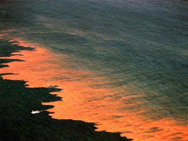 Jednobuněčné mořské řasy jsou již přinejmenším posledních deset let považovány za jednoho z kandidátů na lék proti globálnímu oteplování. Dokáží totiž odebírat z atmosféry velké množství oxidu uhličitého. Šíření některých druhů má však nepříjemný vedlejší efekt: řasy vypouštějí do vody toxiny, které se hromadí v dalších článcích potravního řetězce.